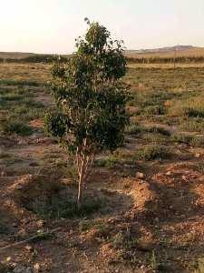 أرض فلاحية للبيع عين وساره تقدر مساحتها ب45هكتار