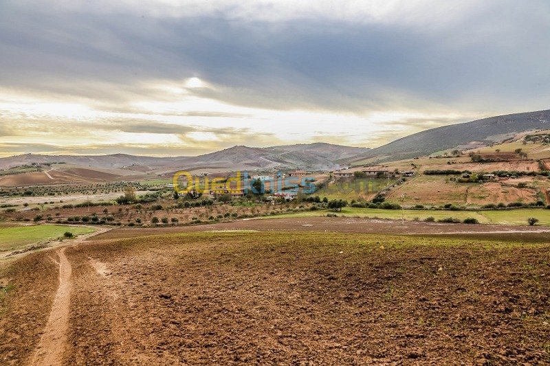 Vente Terre Agricole Ain temouchent Oulhaca el gheraba