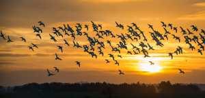 Concours national pour la meilleure photo d'oiseaux migrateurs