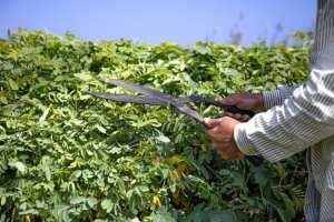 Jardinier offre ses services à domicile