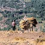 Profil Fourrager de l'Algérie