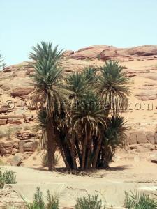 Les Oasis de Moghrar et Tiout, Wilaya de Nâama