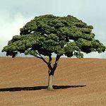 Journée de l'arbre : 1200 plants seront mis en terre