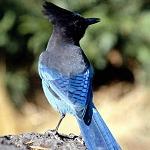 BATNA : L'ornithologie à l'aube au 3ème millénaire.