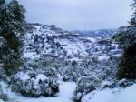 La neige endommage 50% des oliveraies de montagne TIZI-OUZOU, Direction locale des services agricoles