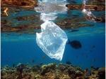 Les déchets envahissent les fonds marins Menaçant la vie de la faune et de la flore sous-marine