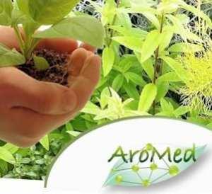 le 1er salon national des plantes aromatiques et médicinales,se tiendra du 01 au 03 Octobre 2013 au palais de la Culture de Bouira