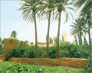 مدينة وهران