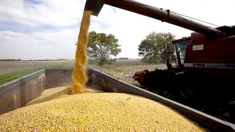 Une production record de céréales attendue à Ain Temouchent