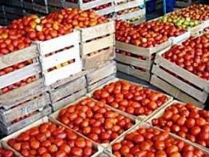 Tomate industrielle à Ben Azzouz : Une filière qui fait de la résistance