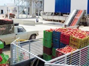 Skikda - Tomate industrielle : Le groupe Benamor inaugure une nouvelle unité de transformation