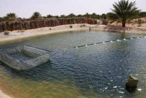 2e Salon de la dégustation d'In Salah: Franc succès pour les aqua-agriculteurs