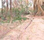 قلعة الشيخ بوعمامة بولاية النعامة