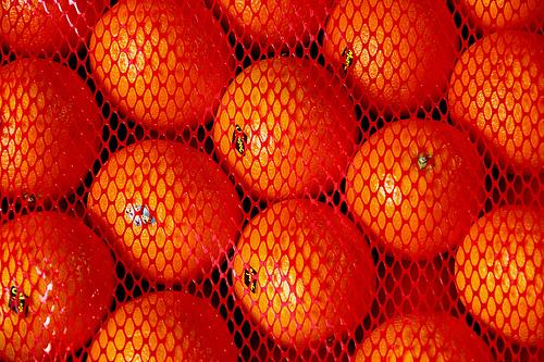 Chlef - La fête des oranges revient