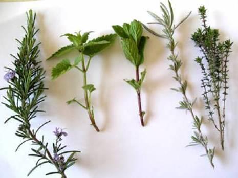 Plantes aromatiques et m dicinales pam un march for Vers dans les plantes