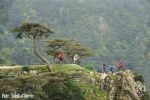 Le parc national de Theniet El Had wilaya de Tissemsil
