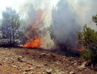 إتلاف نحو 30 هكتارا من الغابات و1313 شجرة مثمرة حسب حصيلة سلطات ولايتي خنشلة وباتنة