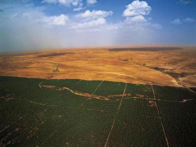 Barrage vert : projet agro-écologique précurseur de la lutte contre la désertification en Afrique