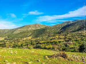 TLEMCEN : contribution à l'étude des trichoptéres au niveau d'oued chouly(nord-ouest ALGERIE)