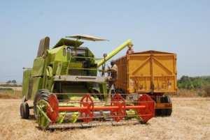 توقع إنتاج مليون و200 ألف قنطار من القمح الصلب واللين بقسنطينة