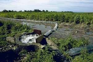 سقي المحاصيل بمياه الصرف ينذر بكارثة صحية في البليدة