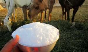 تندوف: مصنع لجمع و تسويق حليب النوق يدخل حيز الإنتاج