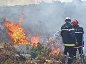 Elle a été la wilaya la plus touchée par les feux de forêts:  Des pertes inestimables pour la biodiversité à El Tarf