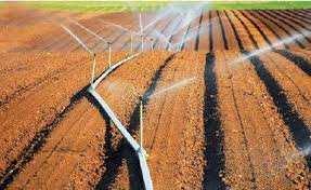 Maghnia - Les agriculteurs en attente de l'extension du périmètre irrigué