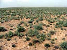El-Bayadh - Les terres de parcours seront mises en location