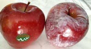 Attention à cette cire cancérigène sur vos fruits !