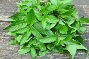 7 herbes qui stimulent le métabolisme et vous aident à perdre du poids