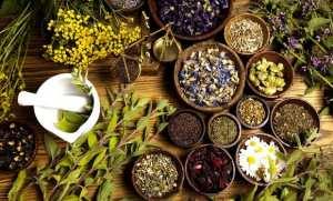 Plantes médicinales: inscriptions pour des formations qualifiantes au profit d'investisseurs à partir de février