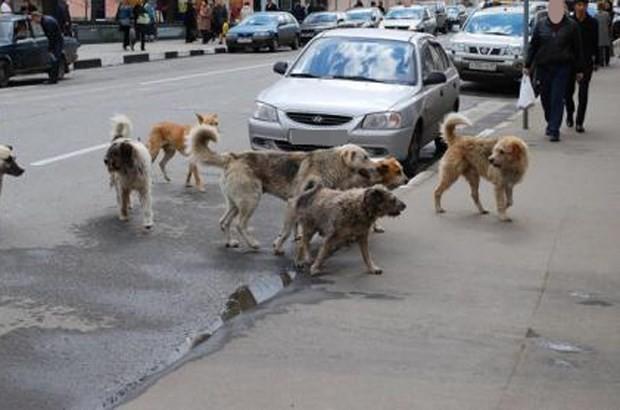 Blida - La menace des chiens errants