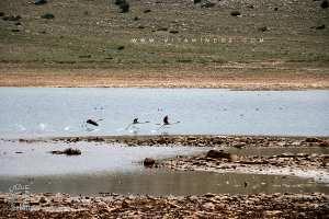Tlemcen: Le barrage Mefrouch, un site incontournable
