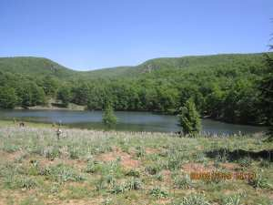 Béjaïa - Appel pour la protection de la forêt d'Akfadou