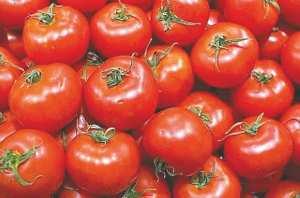 TOUDJA (BÉJAÏA) - 1re édition de la Fête de la tomate