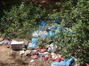 عملية جمع النفايات بغابات تلا قيلاف