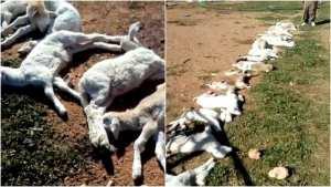 Tlemcen : 30 foyers de la peste de petits ruminants et de fièvre aphteuse détectés
