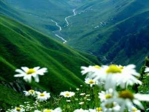 قناة الفلاحة الجزائرية 0551335126