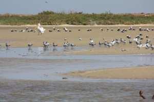 عقلة الدايرة، بحيرة بعين بن خليل ولاية النعامة الجزائرية، مساحة المنصة 24 هكتار والمكان المقصود حوض الدايرة بجانب بلدية عين بن خليل.