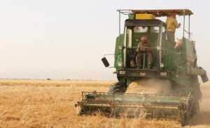 تطوير زراعة العدس موضع اهتمام مديرية فلاحة تلمسان