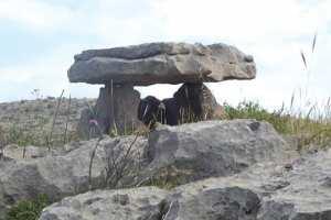 Ouled Rahmoune (Constantine) -  Un site archéologique en danger