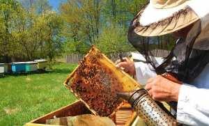 La filière apicole peut générer 4 milliards DA chaque année des produits de la ruche