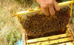 El-Oued: pour l'intégration de l'apiculture dans la nomenclature de la formation professionnelle