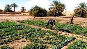 PROMOTION DE L'AGRICULTURE DANS LE SUD Développer d'autres créneaux
