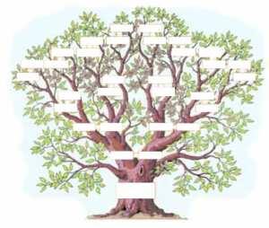 Faire son arbre généalogique : Combien de temps faut-il ?