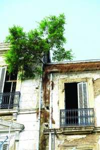 Les «jardins suspendus» de Skikda: Une avenue qui tombe en décrépitude