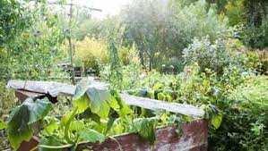 Mostaganem - Le jardin de l'ancienne gare routière abandonné à son triste sort