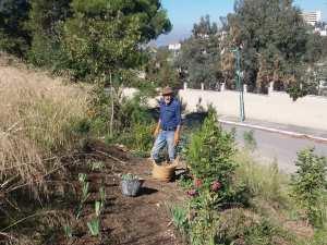 Constantine – Une journée de travail à Djenane Dardar Qacentina: Plantation de fixation de sol avec l'iris