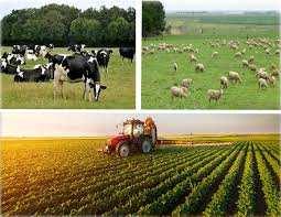 Etudes de faisabilité des projets agricoles , Expertises,
